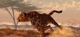 "Daniel Eskridge ""Speeding Cheetah"" image and tutorial!"