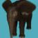Baby Mammoth fur for Daz Baby Elephant