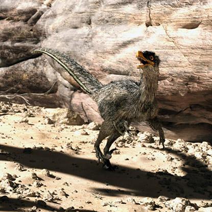 DR_raptor