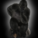 """Kong"" by Richard!"