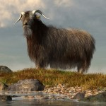 Shaggy Goat by Daniel Eskridge!