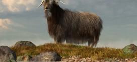 Shaggy Goat by Daniel Eskridge!