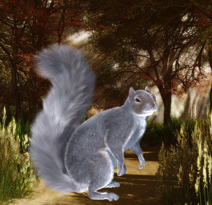 SquirrelForYou