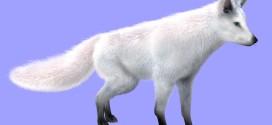 Arctic fox: furred!