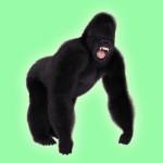 gorilla preset