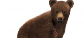 Grizzly cub: furred!