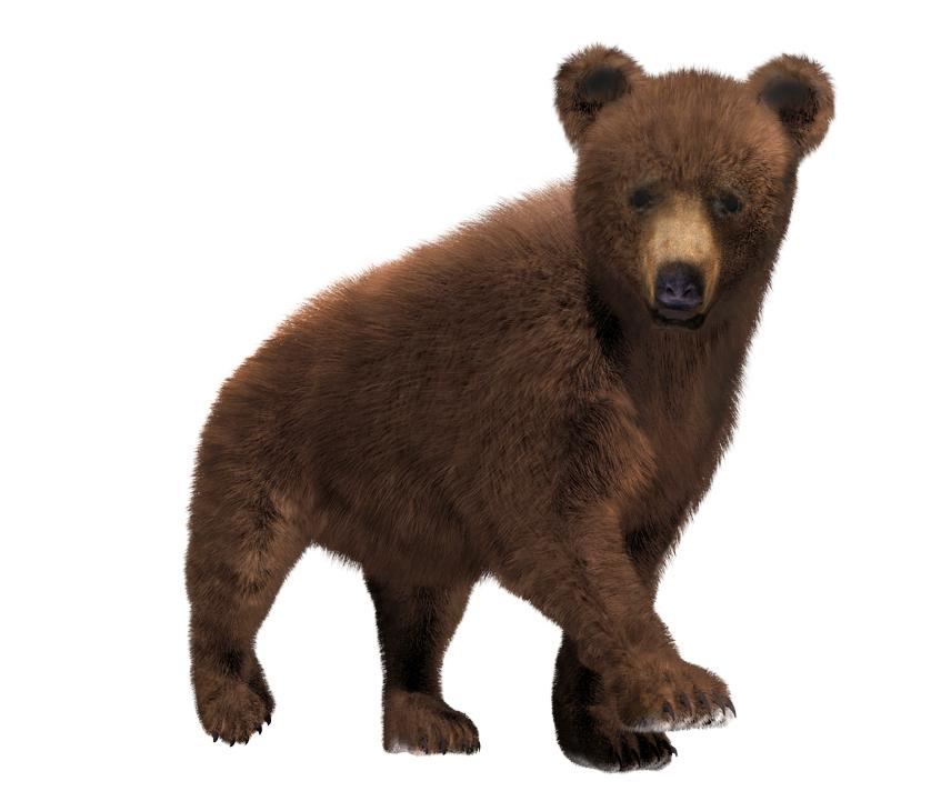Bear weekend posters