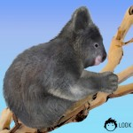 Koala quick composition