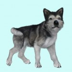 malamute_puppy_fur