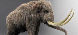 Mammoth from .obj file