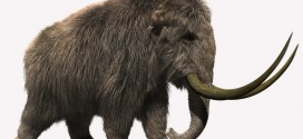 Mammoth: furred!
