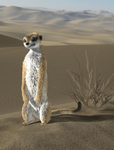 meerkat blog