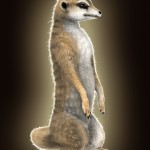 Meerkat: furred!