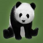 Panda: furred!