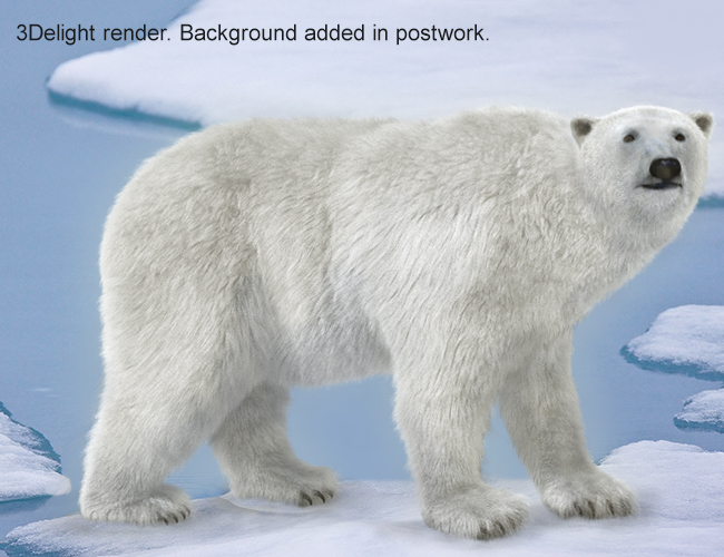 An adult male polar bear (Ursus maritimus) traveling on melting summer sea ice. The bear has blood on his face from feeding on a seal kill.