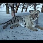 White Tigers for Big Cats2 released and…