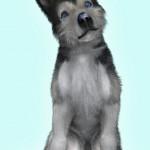 Puppy… again…