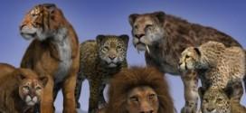 Real Fur for DAZ Big Cat 2