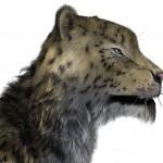 Snow leopard: furred!
